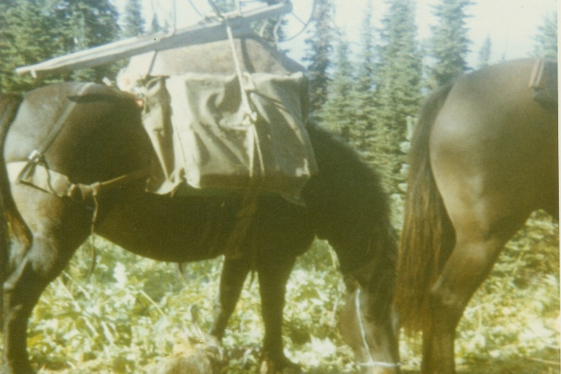 Horse with pack on Cariboo mtn. - 1960